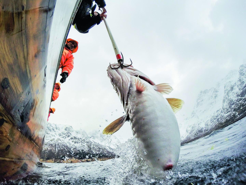 Lofotfiske fra Svolvær