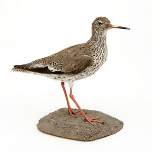 Fåglar vid Sandön