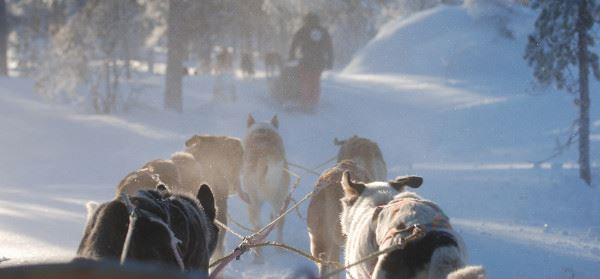 Peakpoint Dogsledding