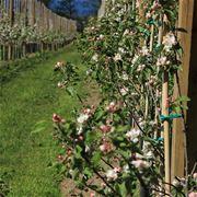 Äppelblomssafari