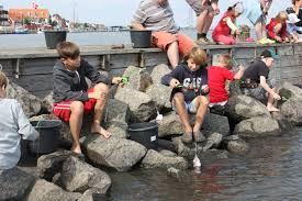 Krabbe Jagt med Fanø Event
