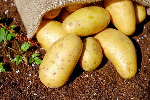 """Föreläsning: """"Potatis - odling,sorter och mat"""""""