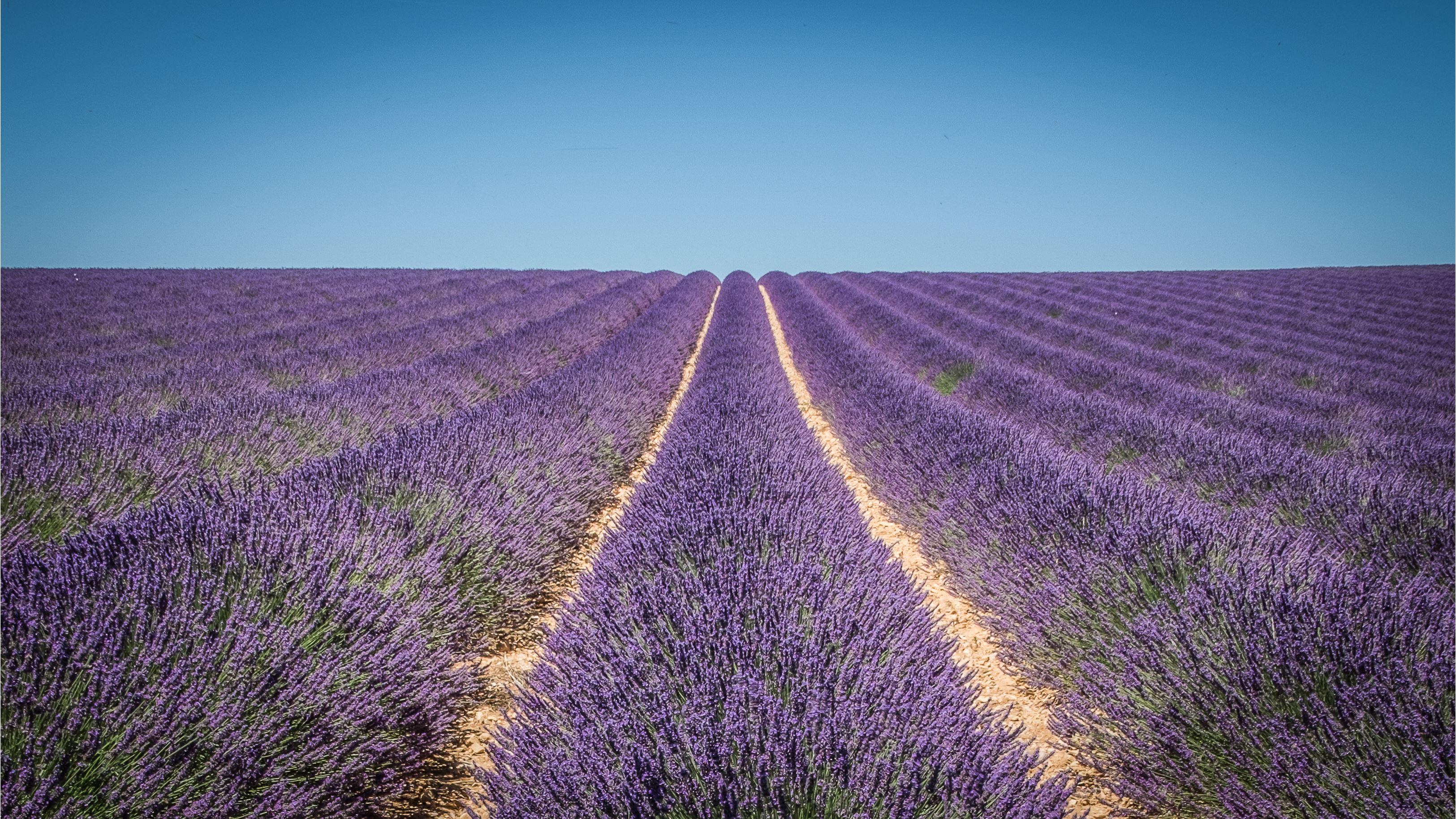 Lavender tour in Valensole, Verdon, Moustiers and Occitane