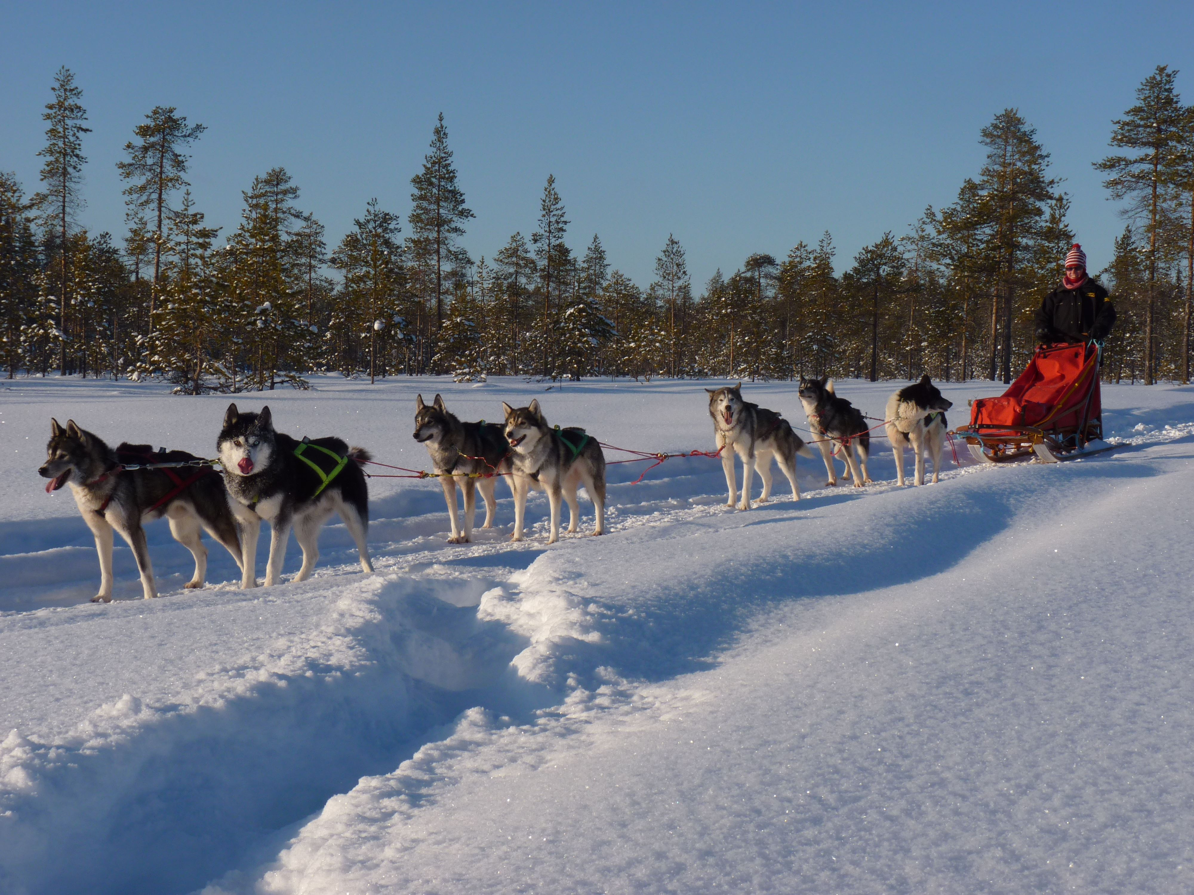 A taste of mushing with Aurora Borealis Adventure
