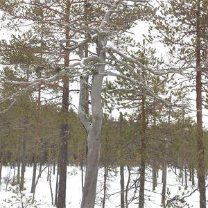 Rakt ut i snön - Sportlovsutflykt i spännande omgivningar