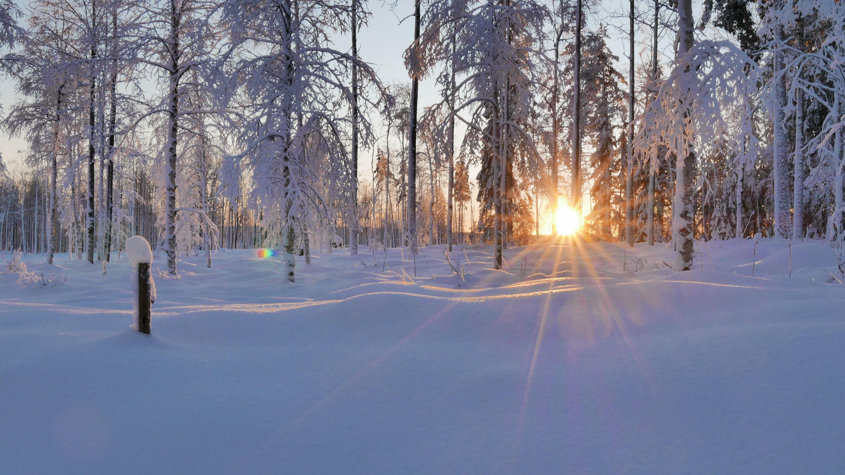 Vintercafé Ljusbodarnas Fäbod
