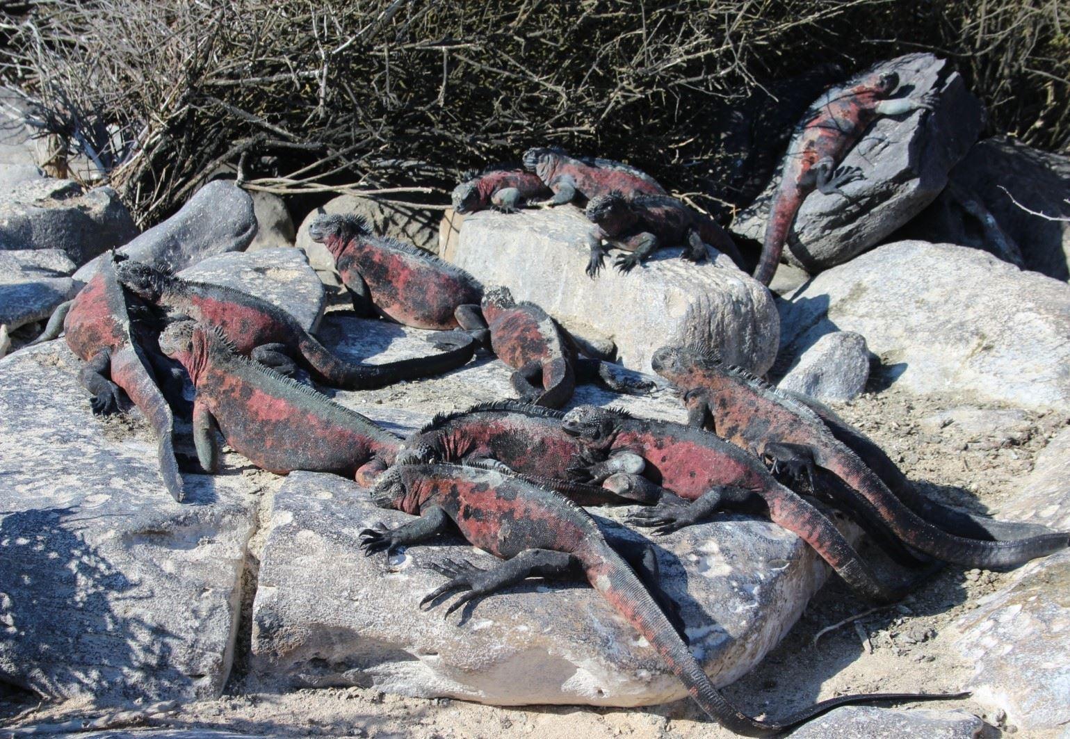 Galapagos - övärlden där djuren regerar