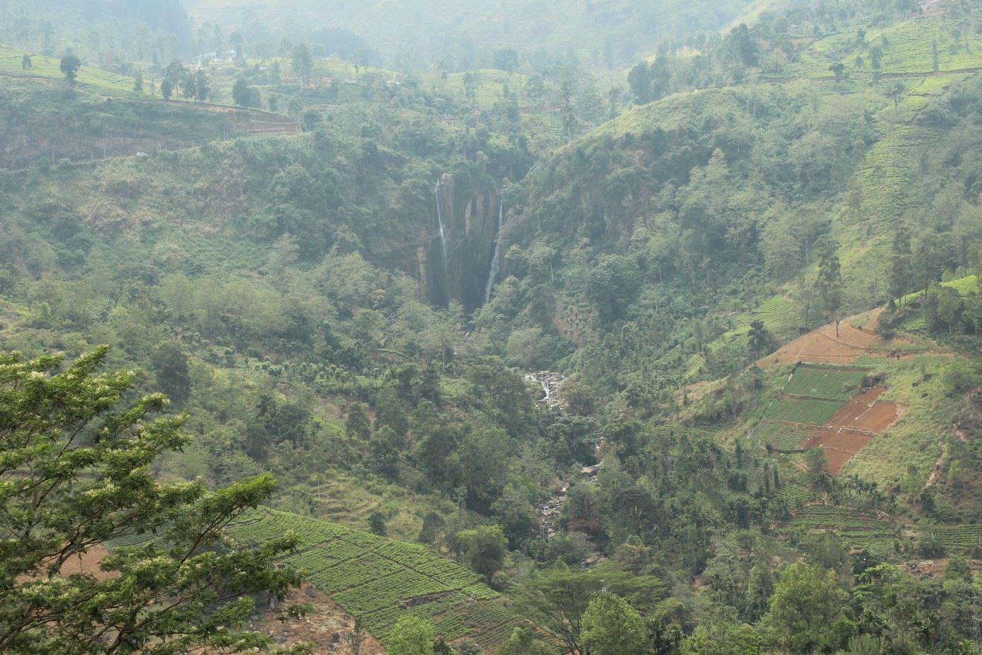 Lurad i Sri Lanka