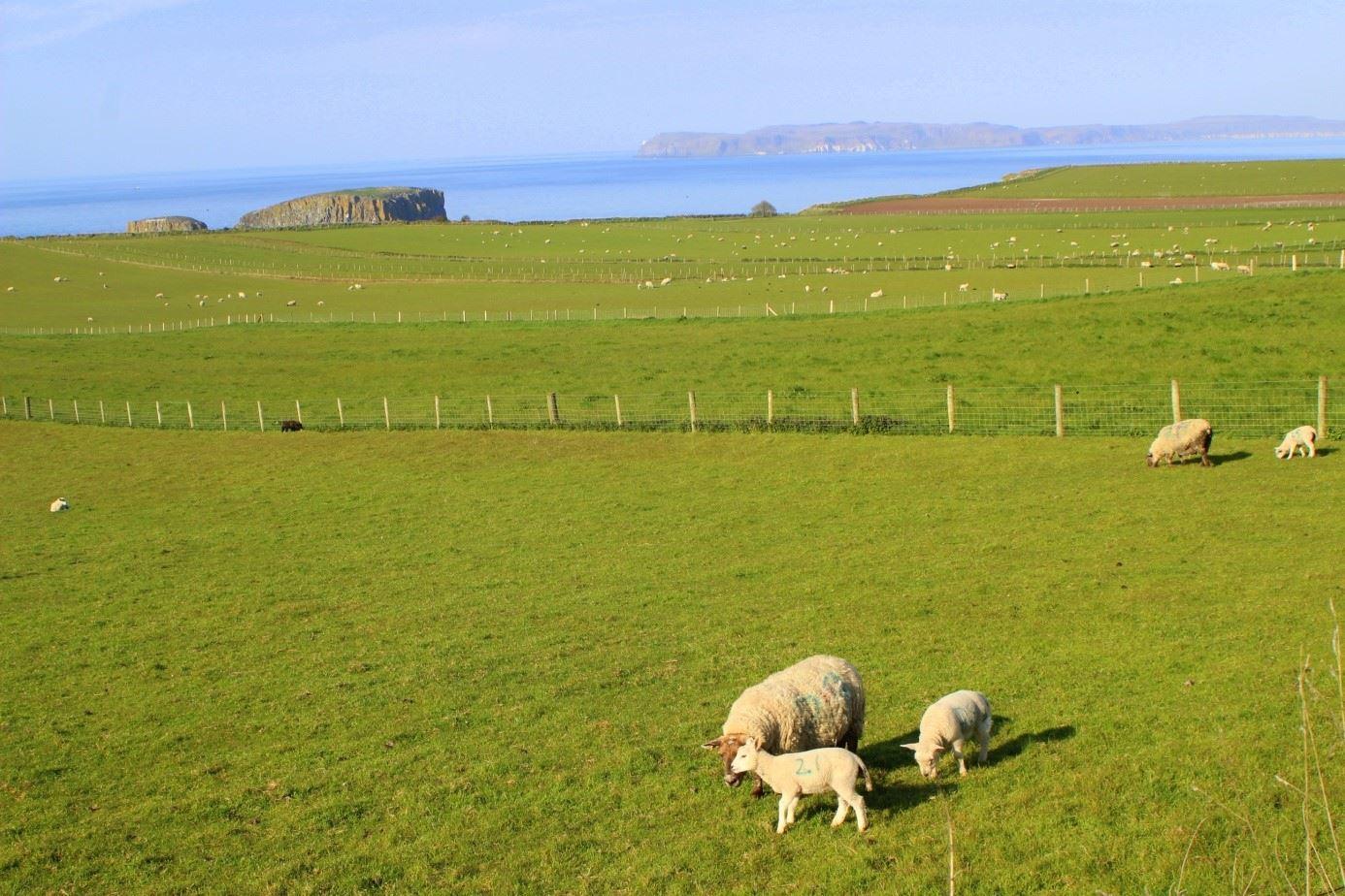 Irland den gröna ön