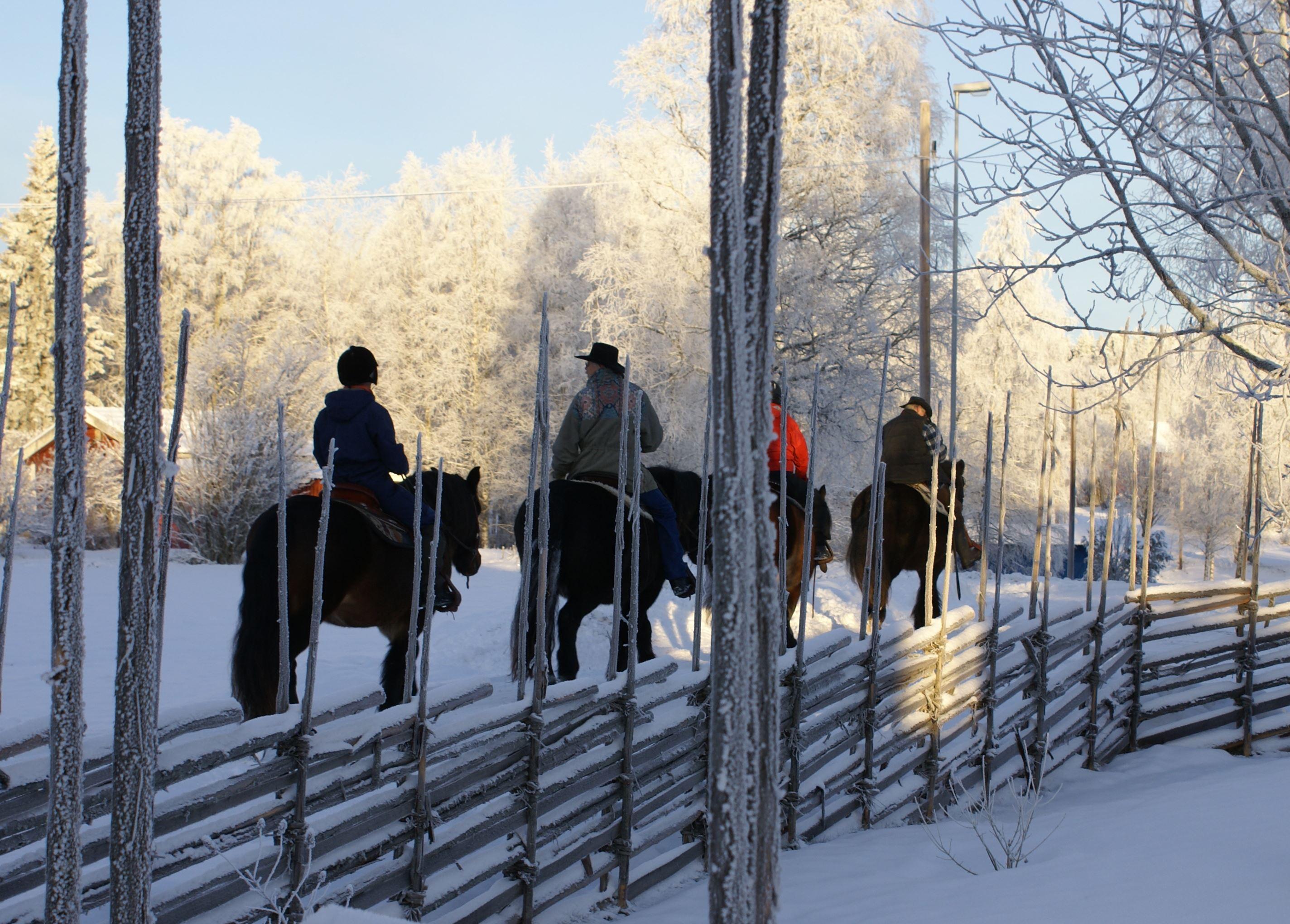 Ride in the forest- Silverhill Stable