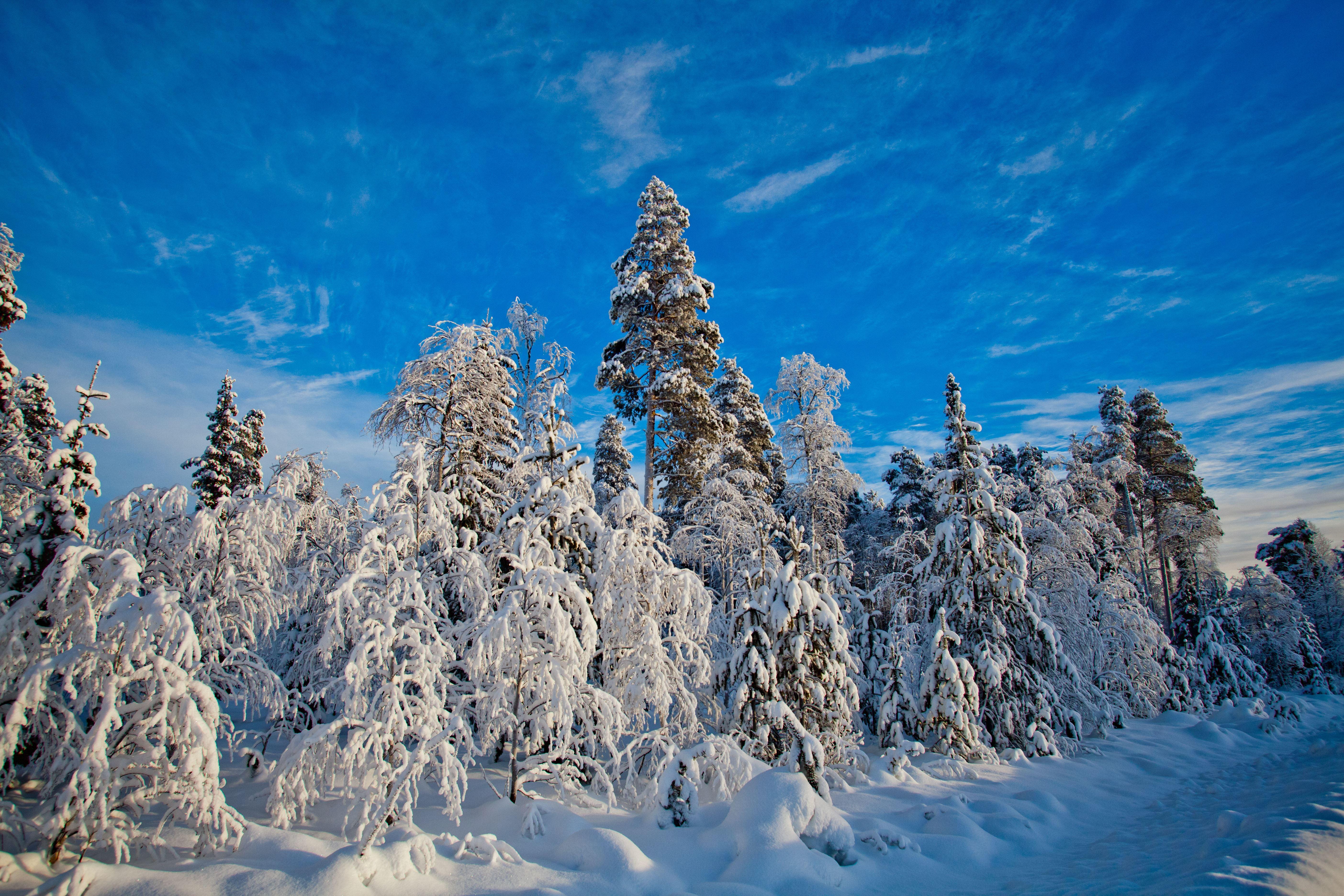 www.ricke.se,  © Malå kommun, Pingstkyrkan Malå