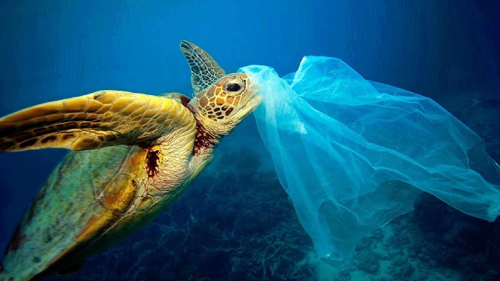 Filmvisning: A Plastic Ocean