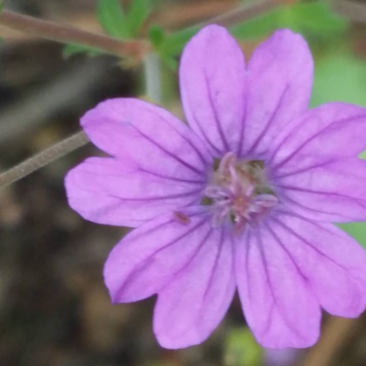 Floweryoga