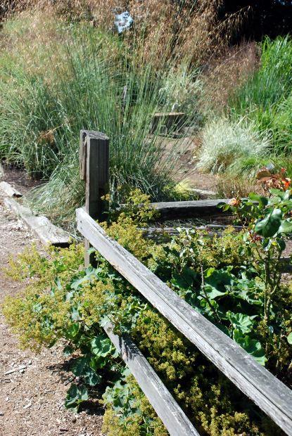 Sjöborgen- ett alternativt leverne från frö och hage till gom och mage