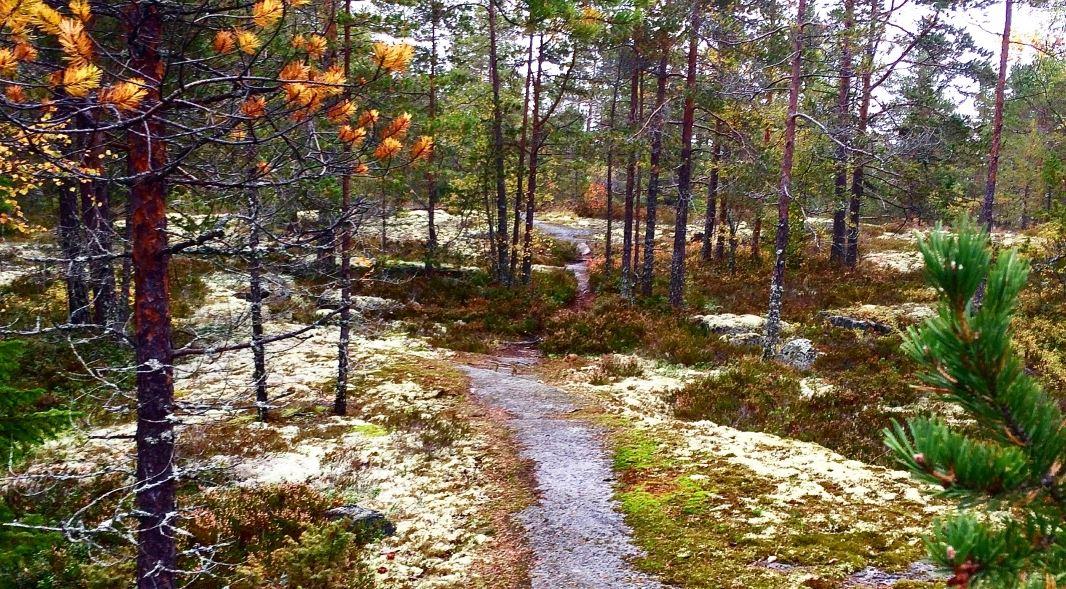 Sundsvall Trail