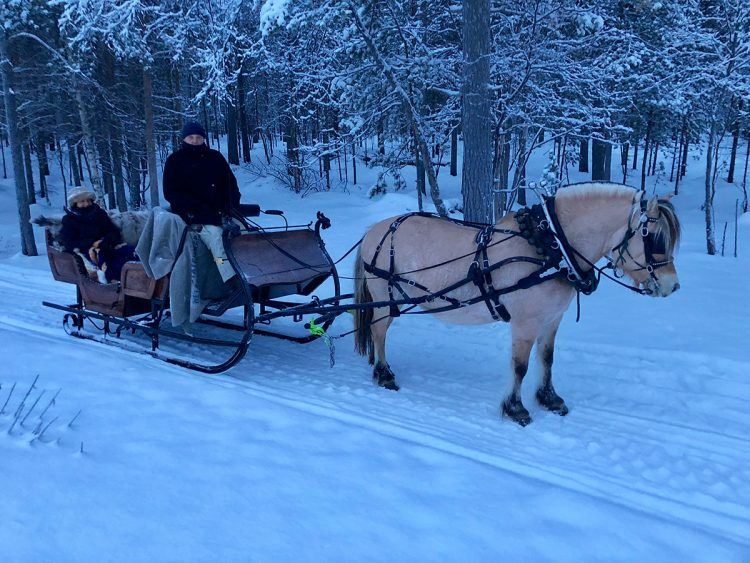 Sleigh Ride in the Arctic Countryside
