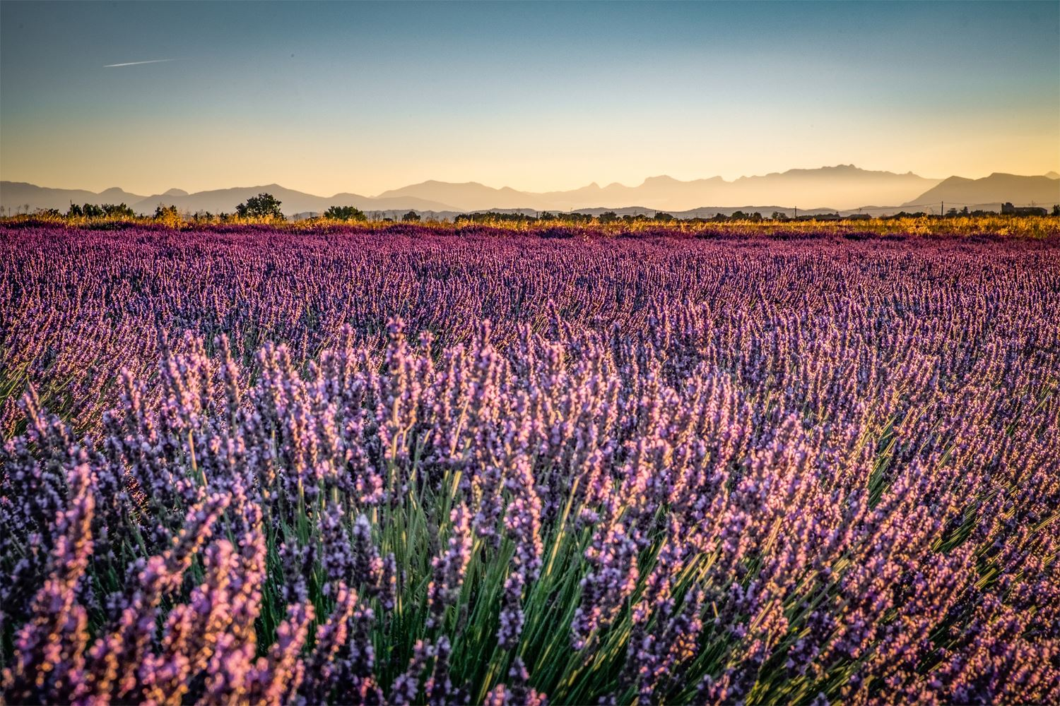 Lavender tour in Roussillon, Luberon park and Sault, capital of lavender
