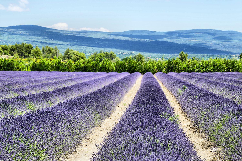 Tour Lavande à Lourmarin, Roussillon et Sault