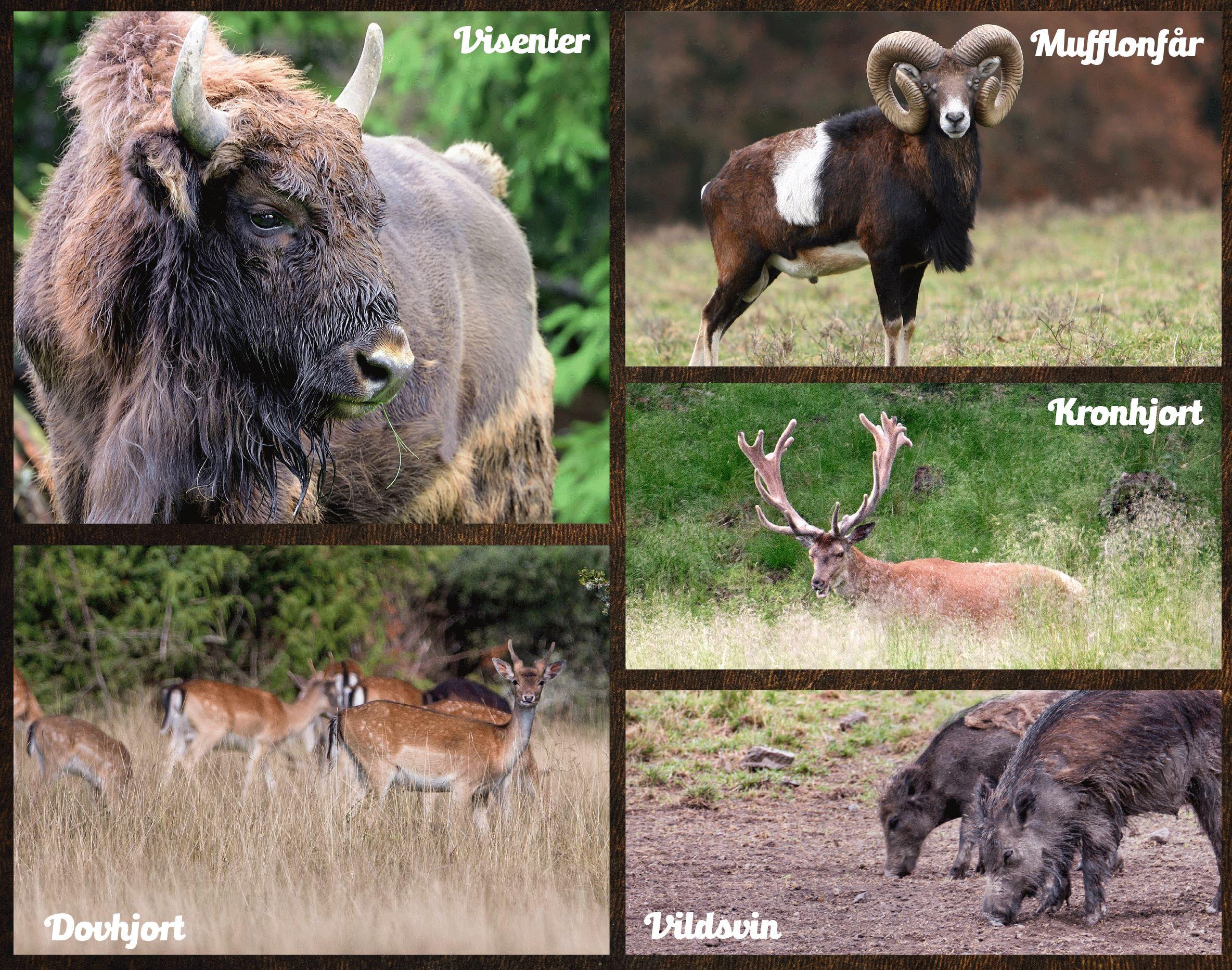 Invigning av Kosta Safaripark