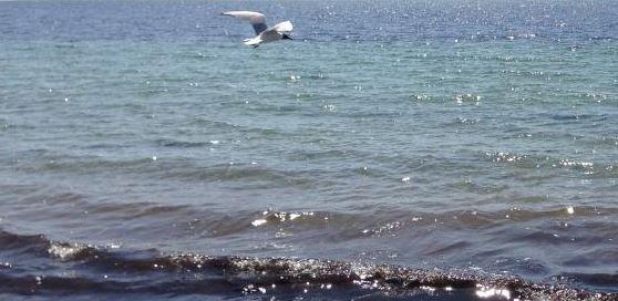Birds along the ocean