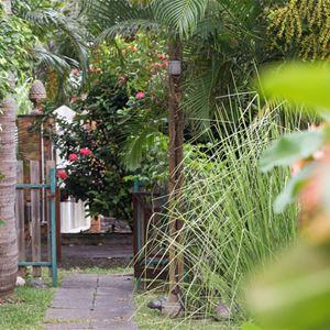 L'Epidendrum***