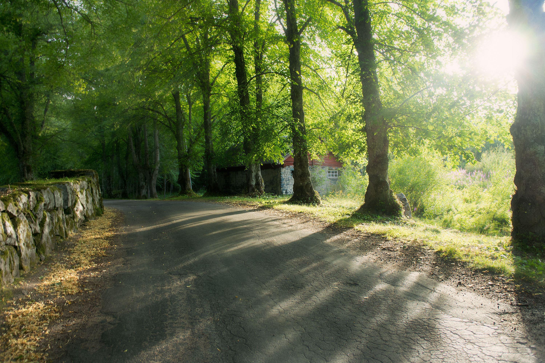 Forntidsvandring i Sofieholm