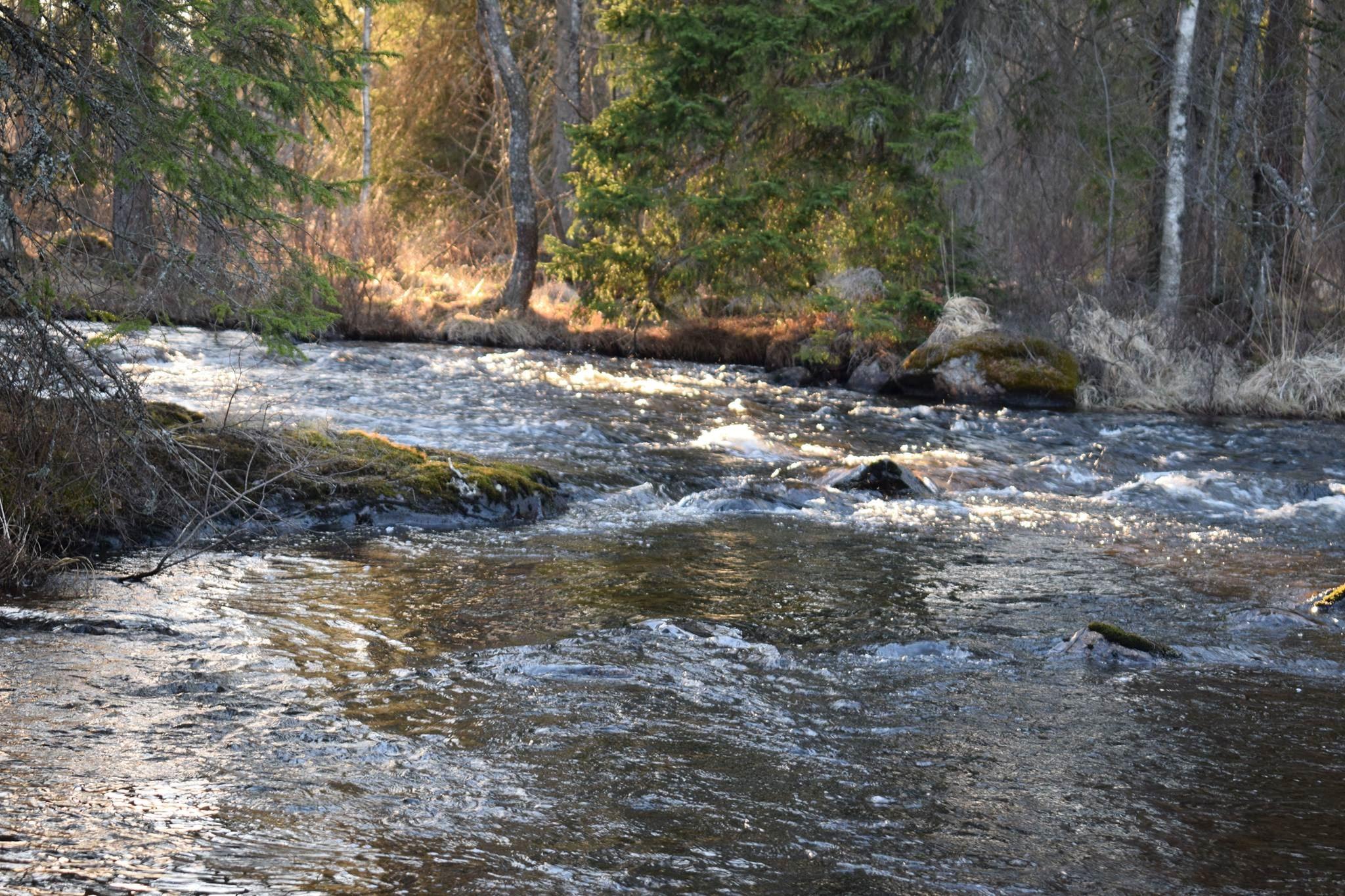 Vidinge gård, Fiskepremiär 2018 Alsterån