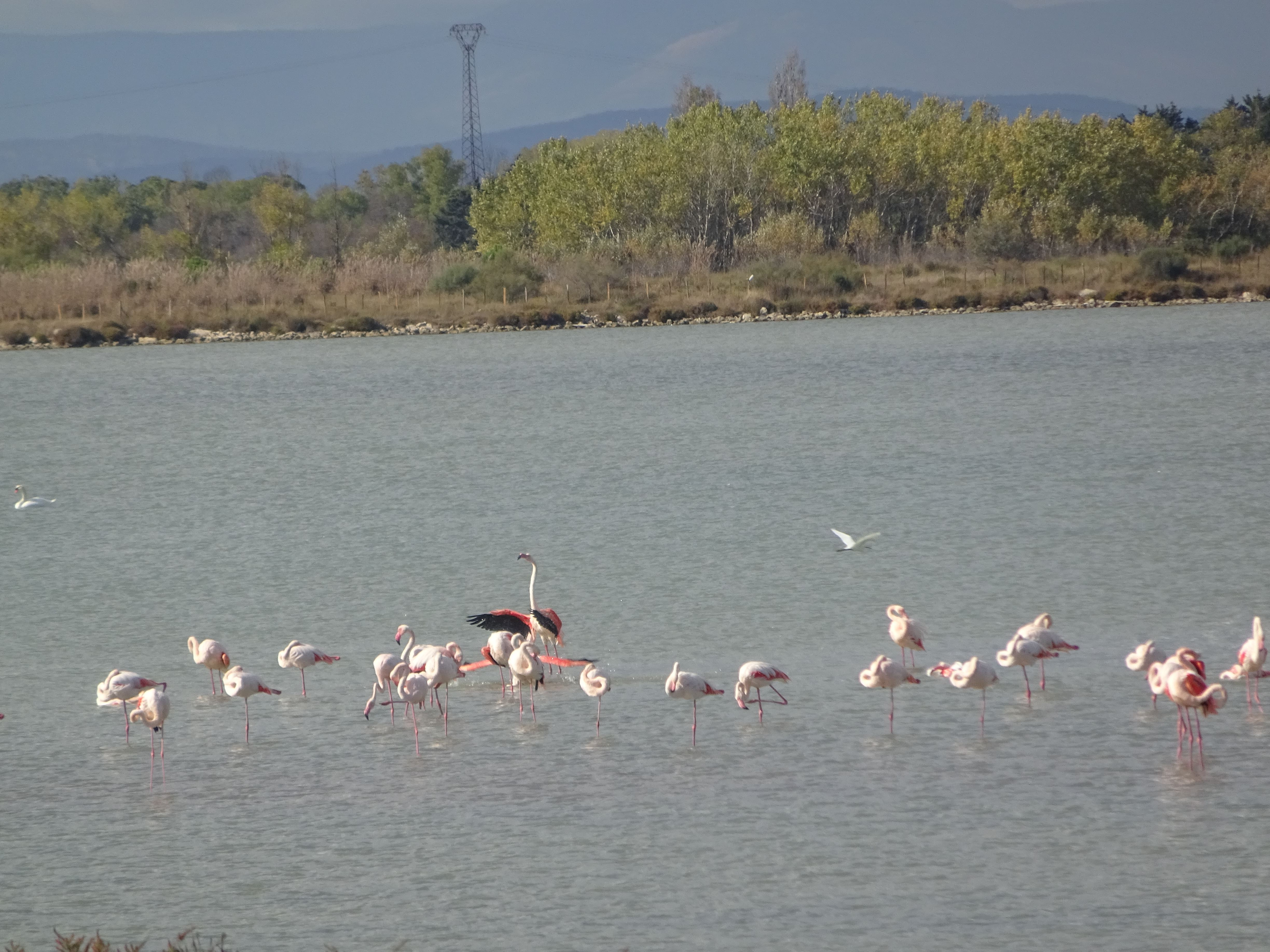 Nature escape in Petite Camargue with Belle Tourisme