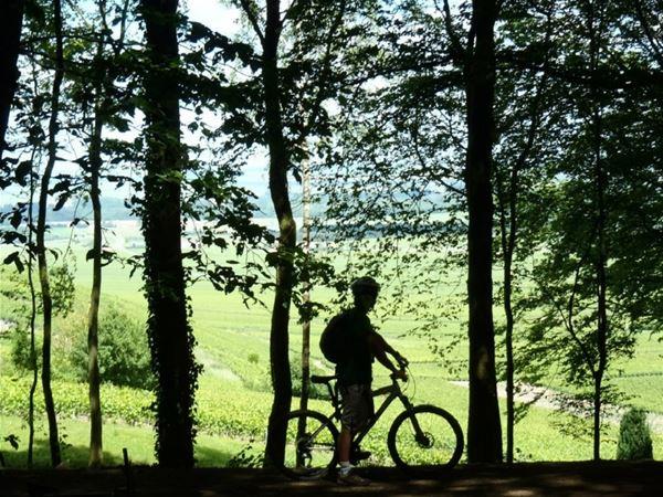 Le vignoble à vélo - demi-journée