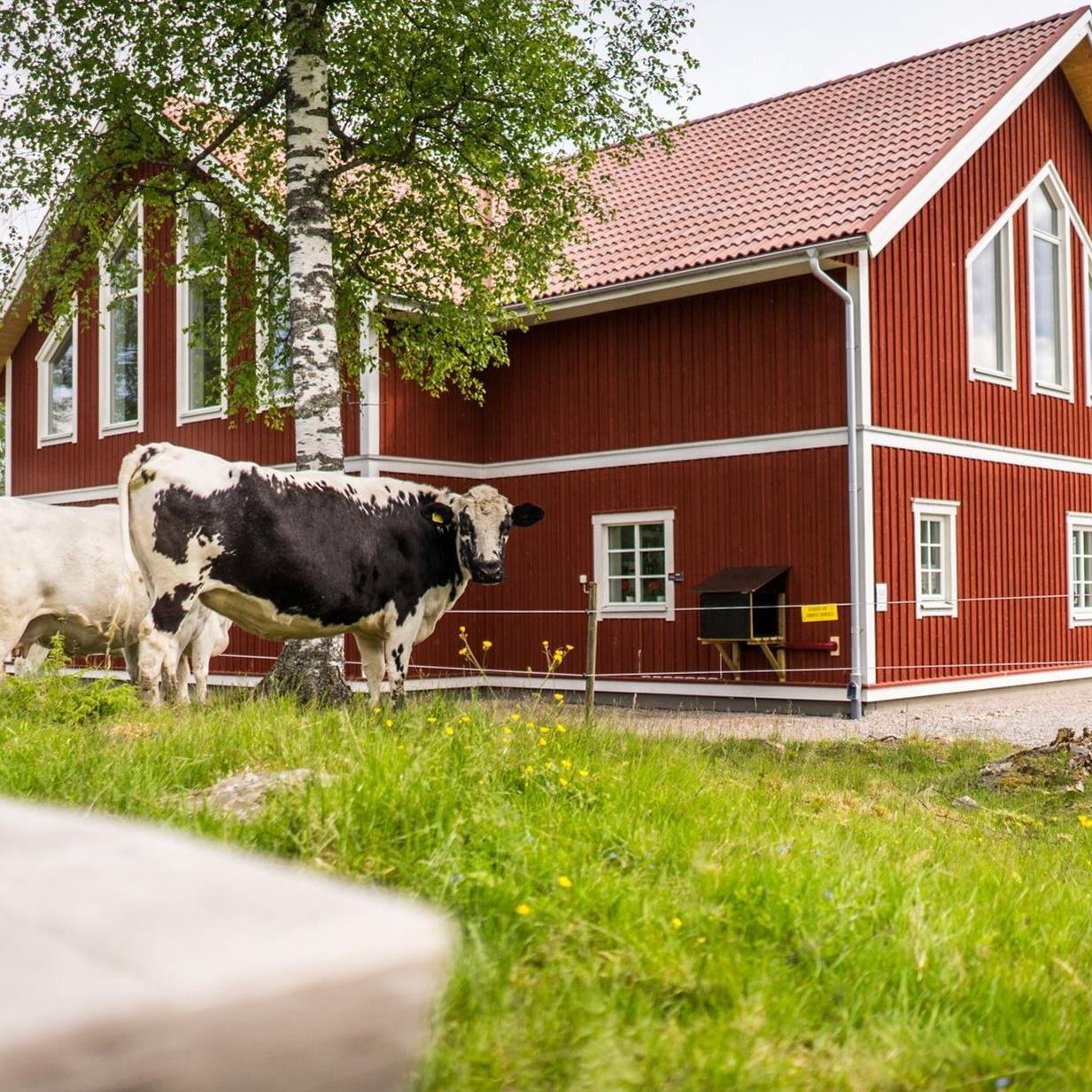 Murboanna's – dairy, café and farm shop