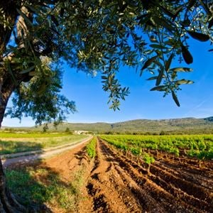 Culture and terroir getaway in the area of Pezenas with Belle Tourisme