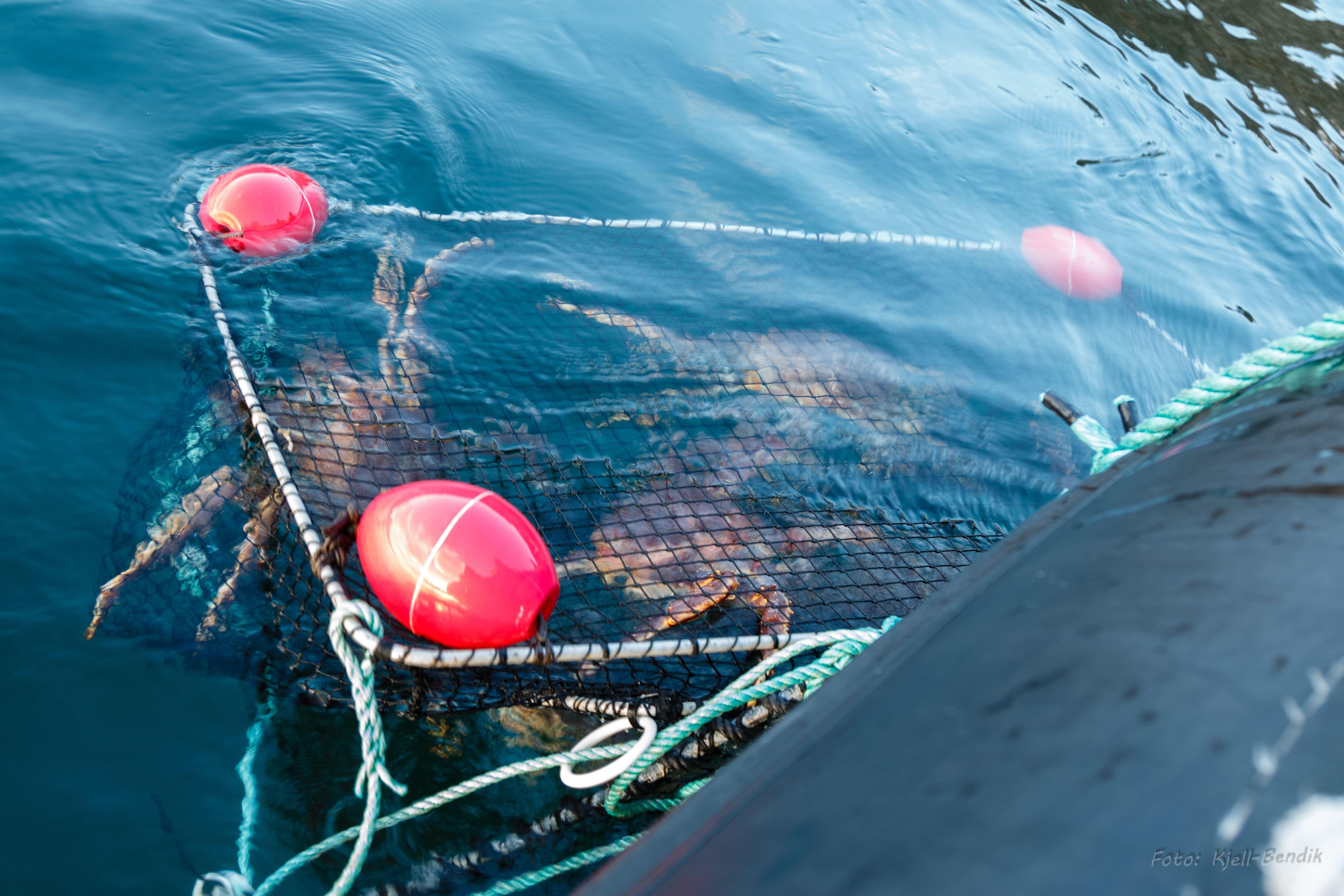 North Cape Rafting, Photo and King Crab Safari