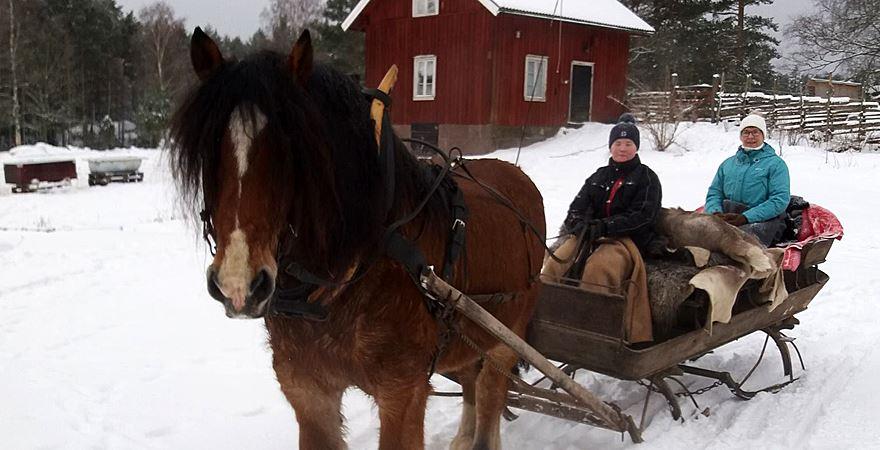 Helgkurs i hästkörning