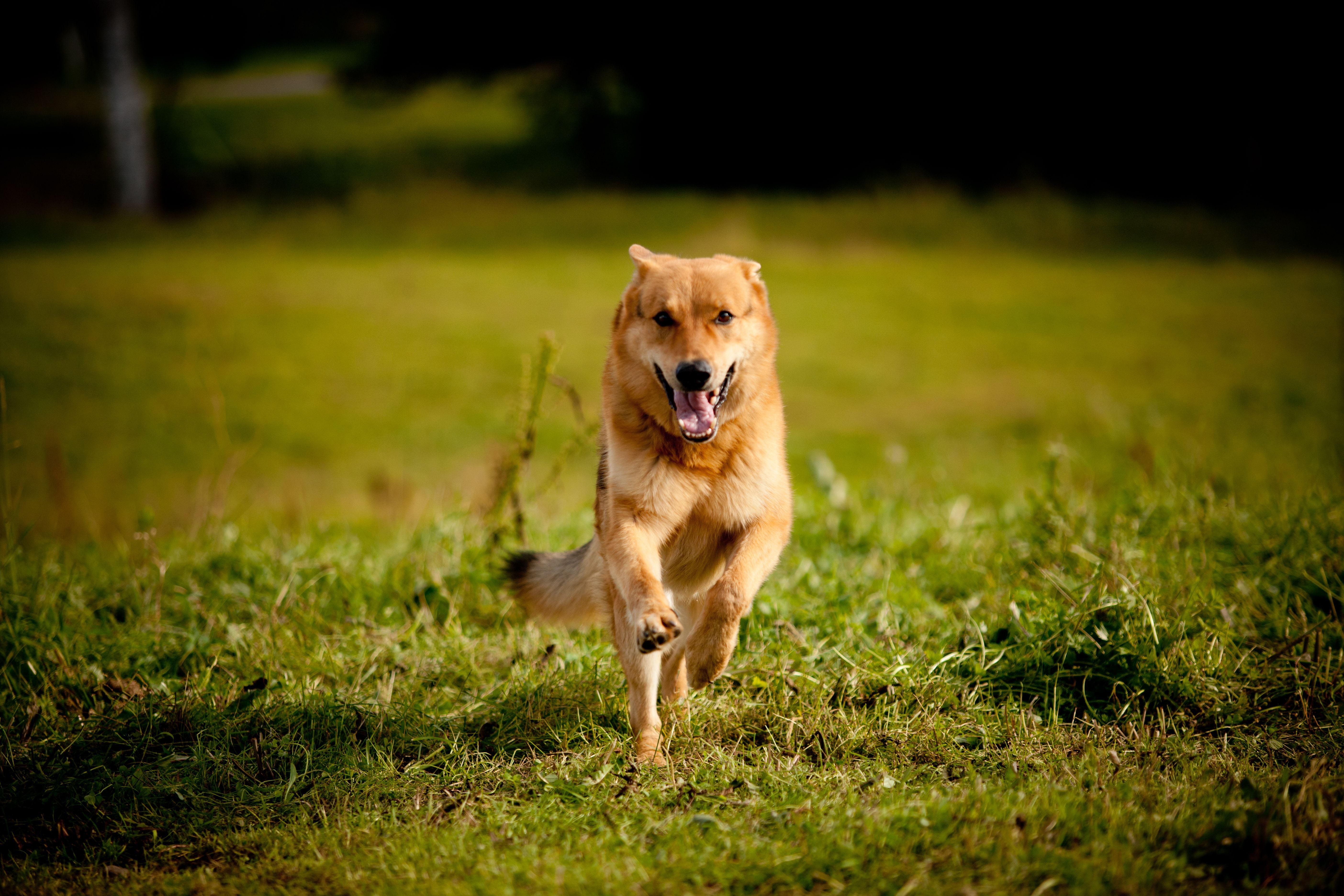 Lydnadstävling för hund - Malå brukshundsklubb