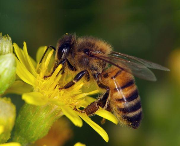 Vandring: Vårblommor och vilda bin i Biparadiset