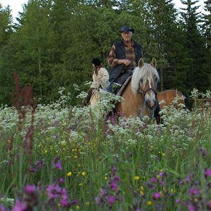 Upplev Siljansbygden till häst - Silverhill Stable