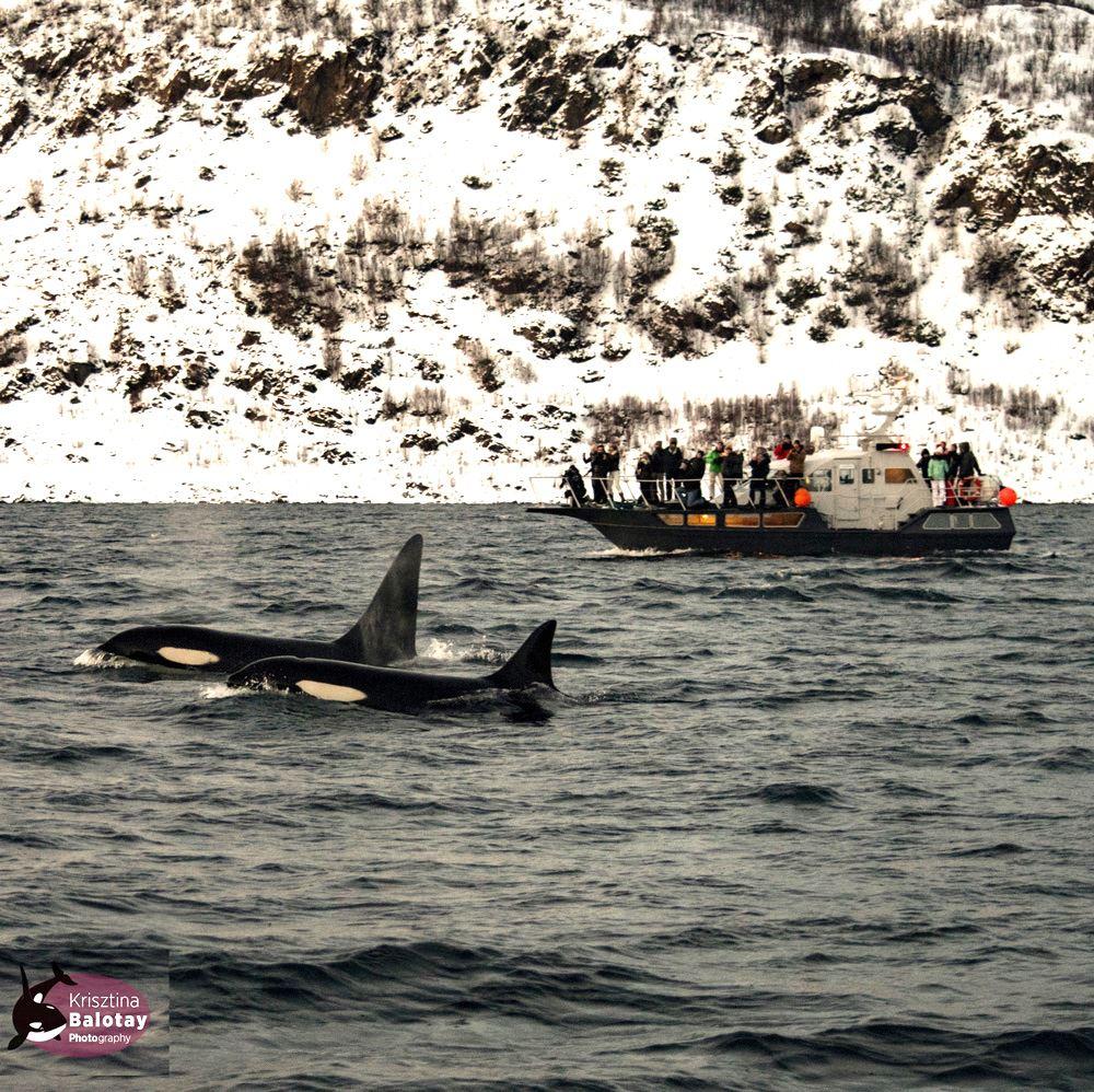 Trollfjord & Villmarks Cruise