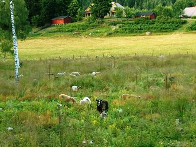 The Harju Heritage Landscape Farm- historical sights