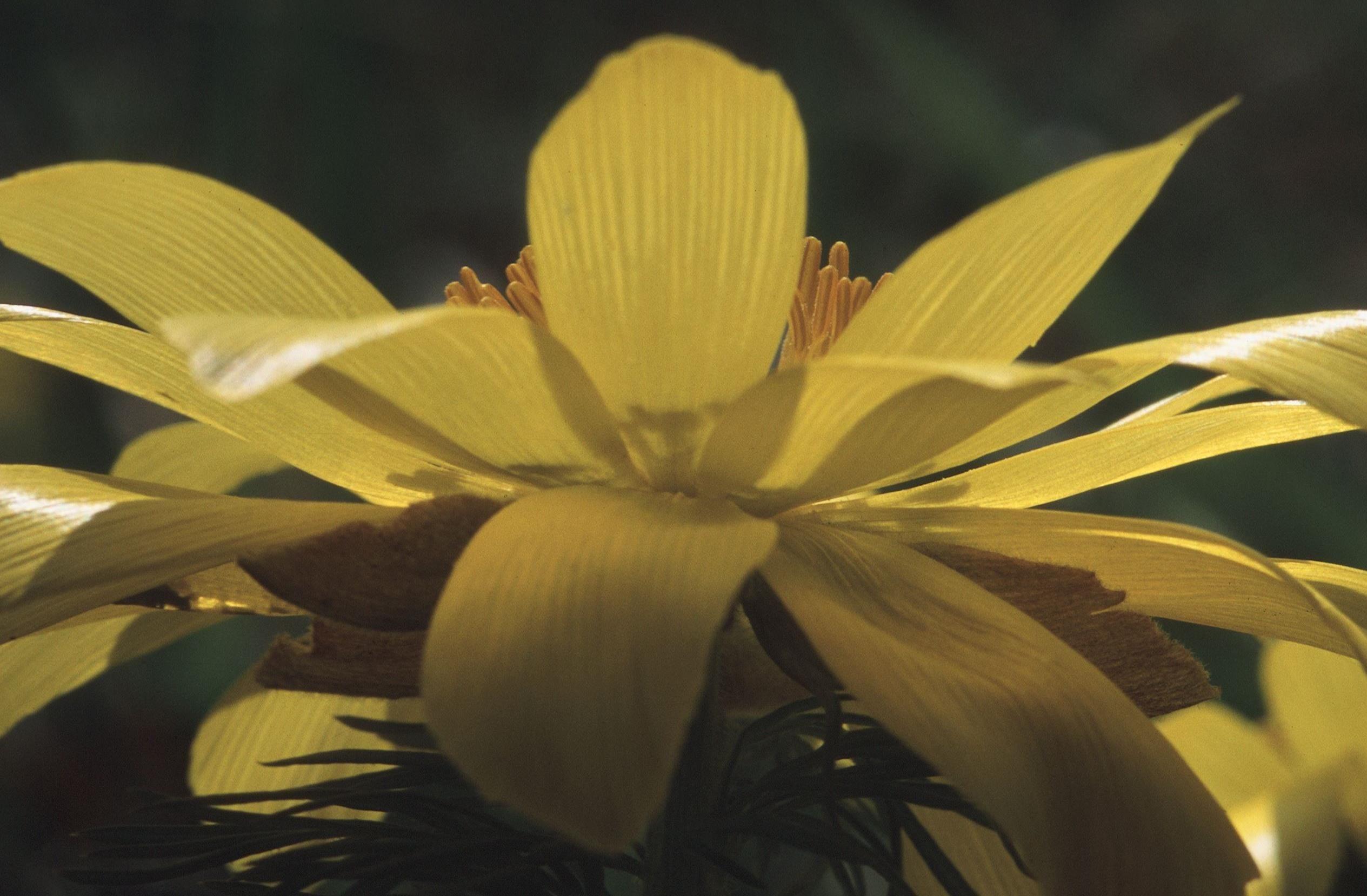 Arontorpsängen - Blomsterlokal