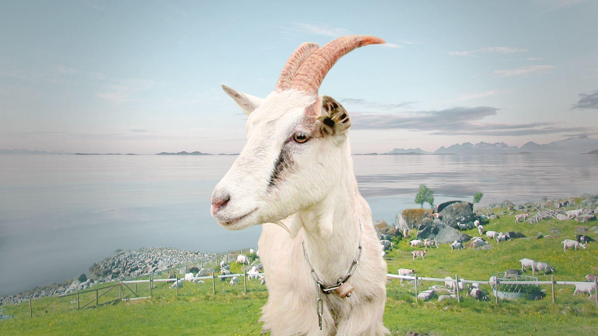Island Cruise & Goat Farm Experience