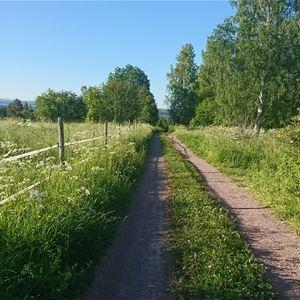 Liten väg utanför Lärkastugan, Sollerön.