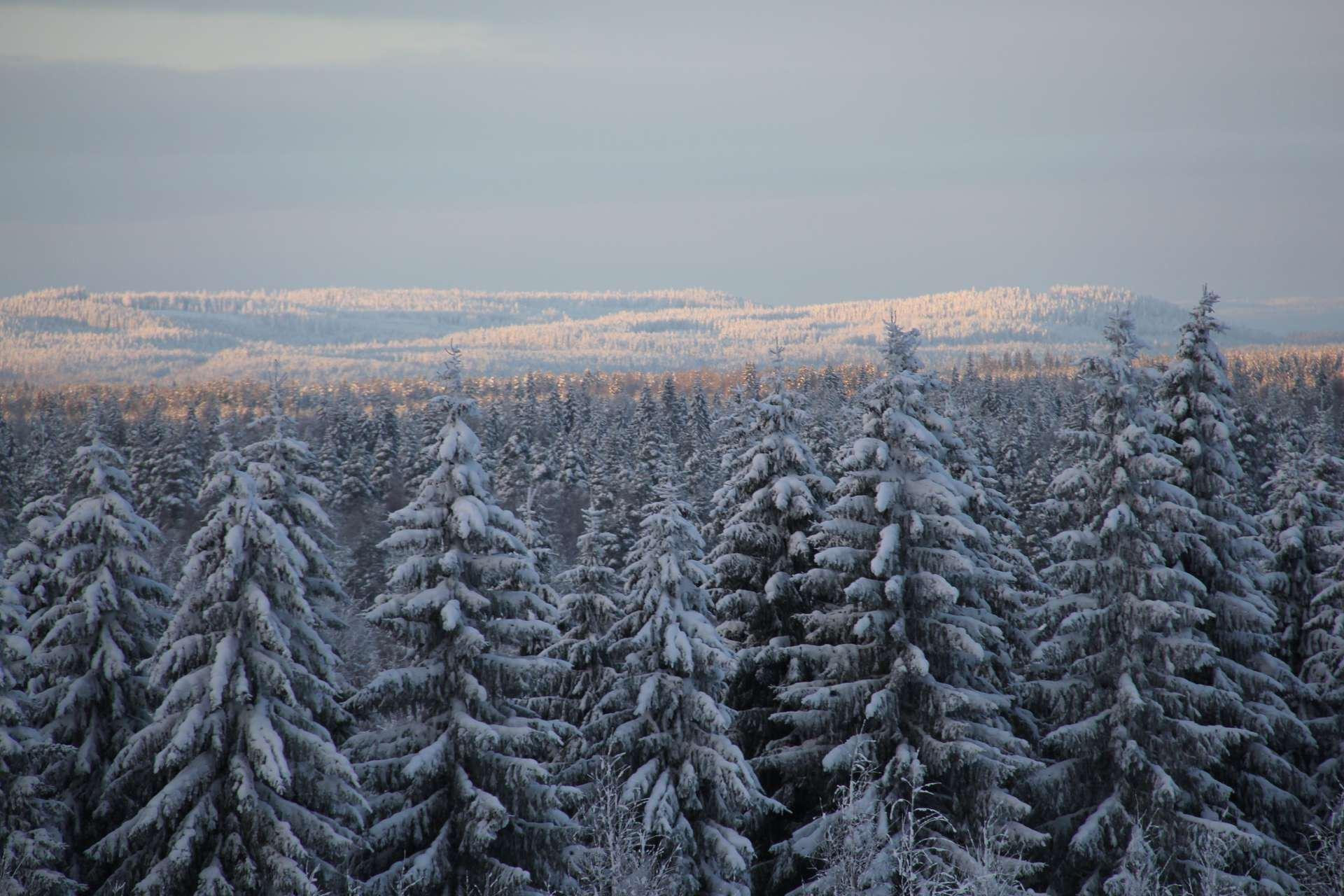 Vuorenkylän luontopolku