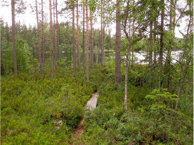 Evo hiking area | Karhulenkki