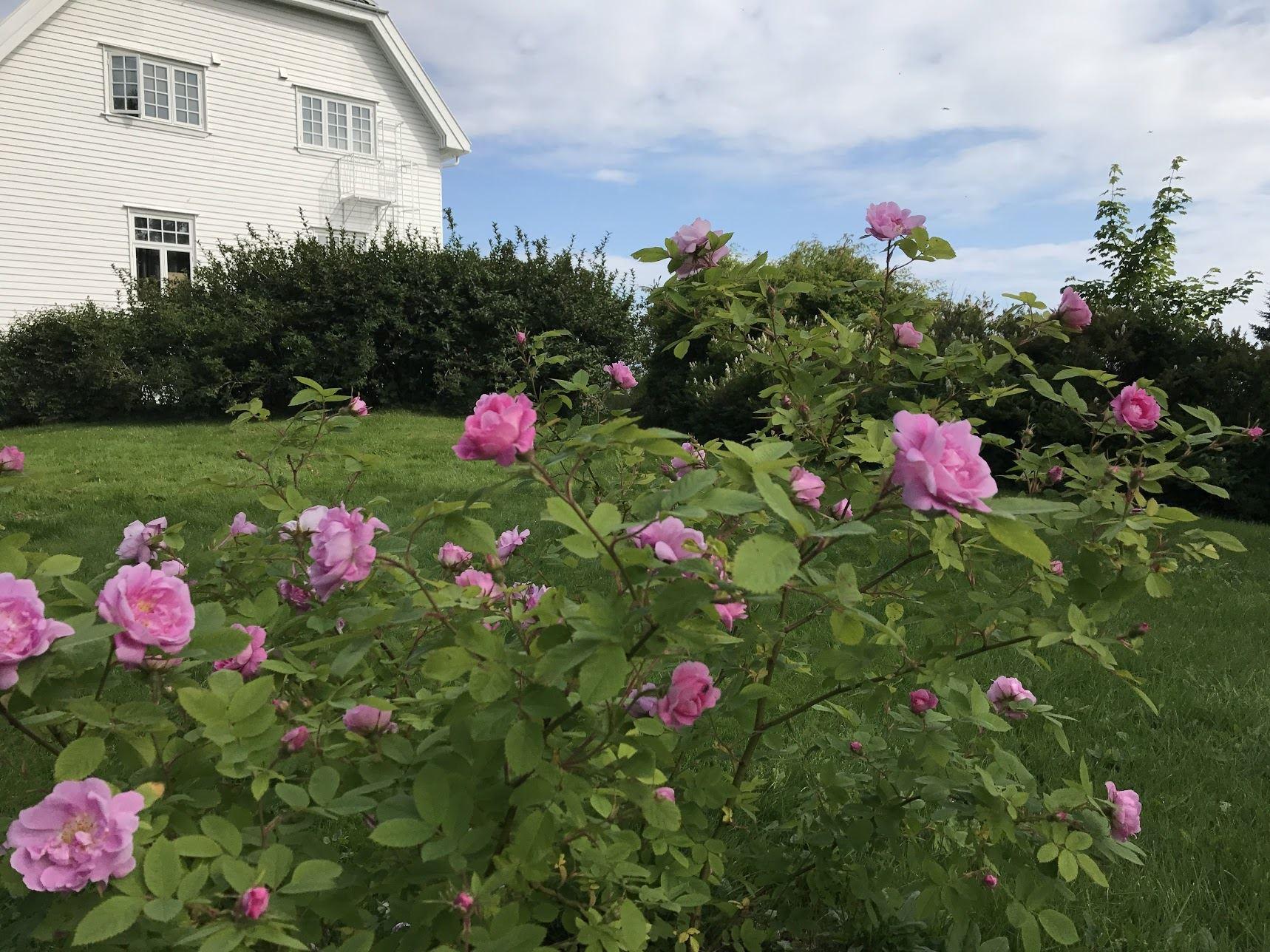 Arctic Garden