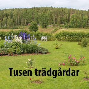 Tusen trädgårdar, Rosenträdgården i Åkullsjön