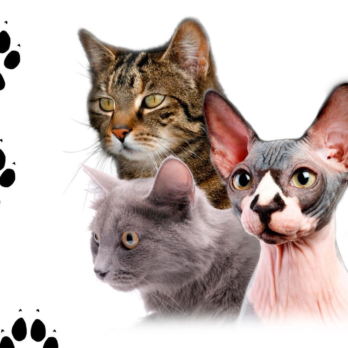 Internationell kattutställning