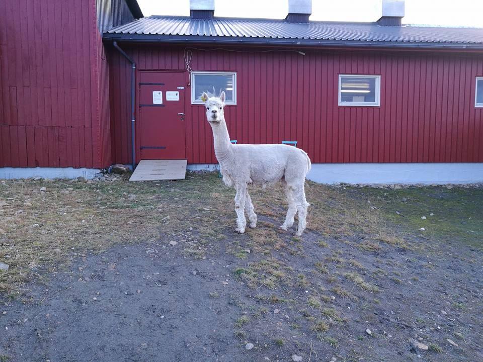 Sollund Gård,  © Sollund Gård, Sollund gård