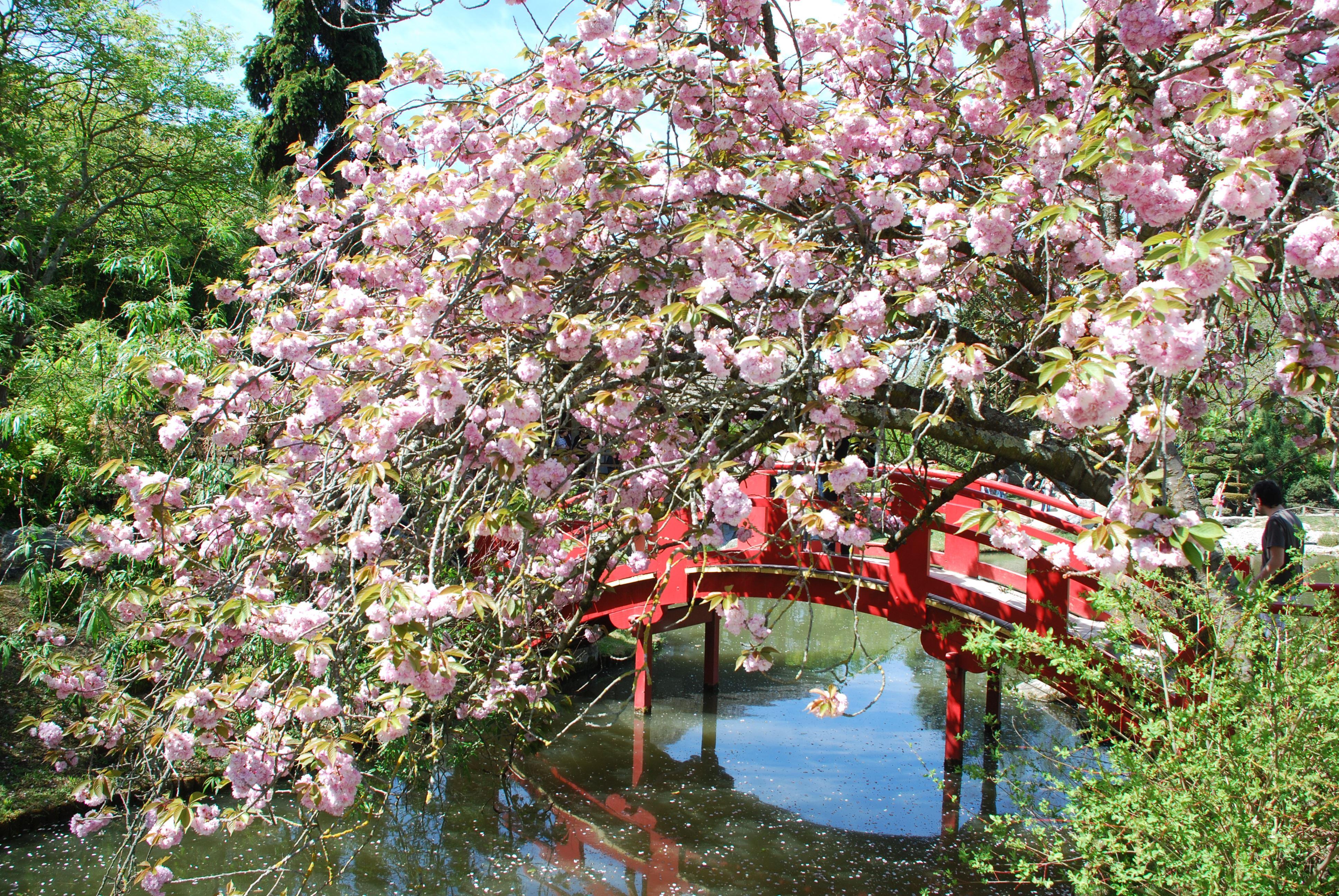 Autour du Jardin japonais, place d'armes et havre de paix