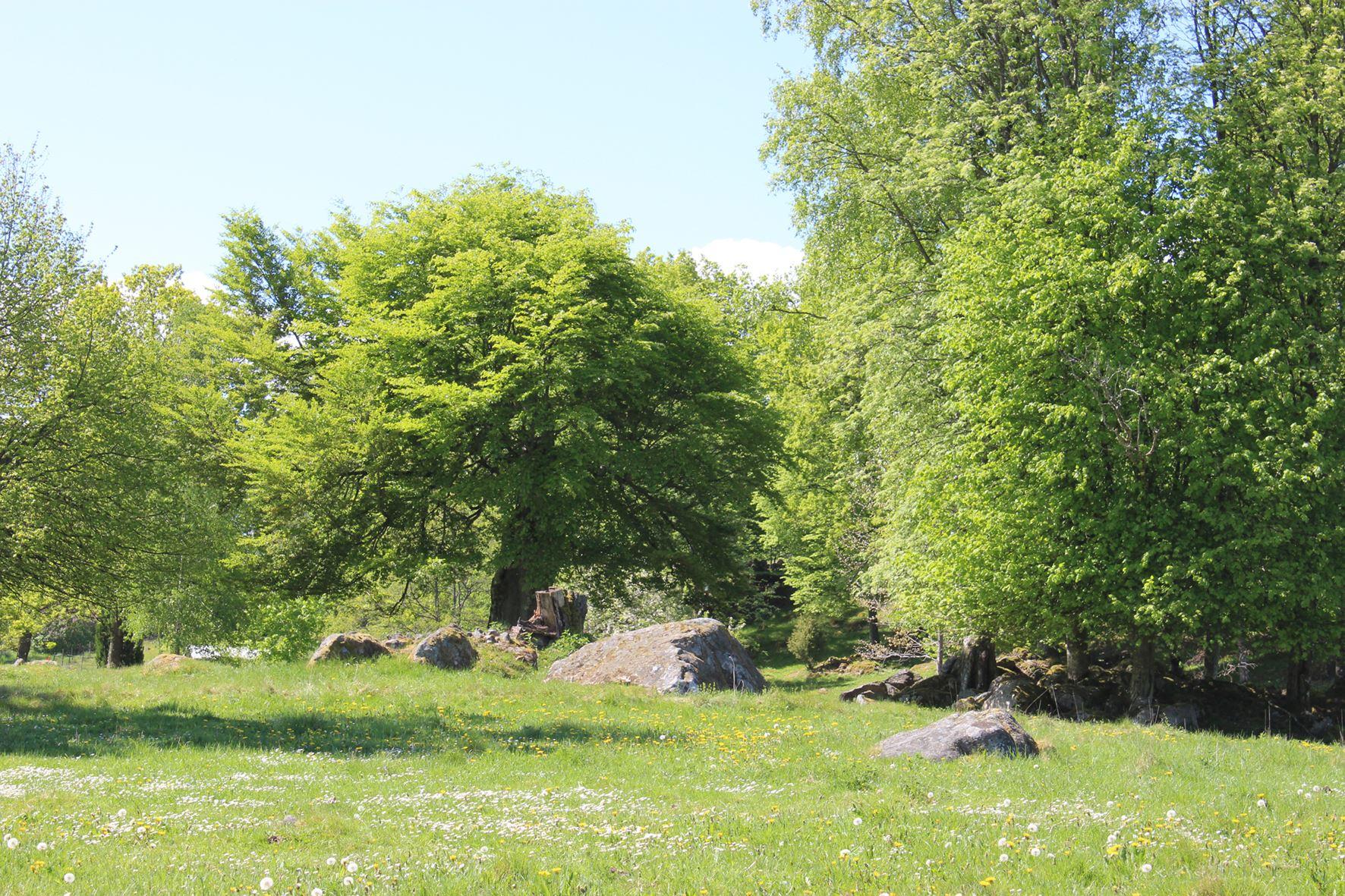 Meadow Walk in Råshult
