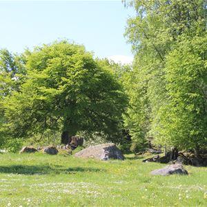 Garden Walk in Råshult